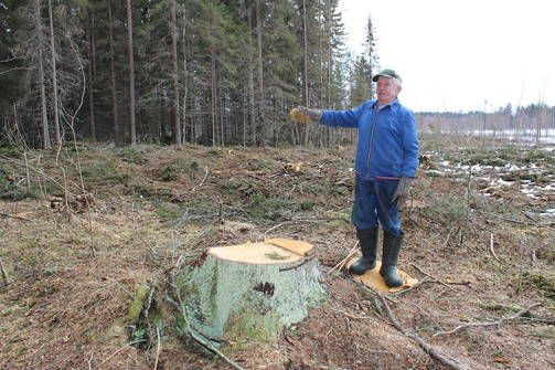 Veli Korkalaisen mukaan hänen metsänsä kaadettiin vahingossa naapurileimikon hakkuiden yhteydessä.