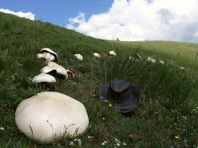 champignons atomiques !