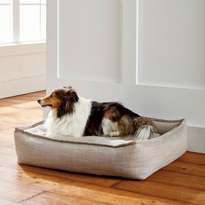 Contempo Lounge Pet Bed in 2020 (With images) Comfy