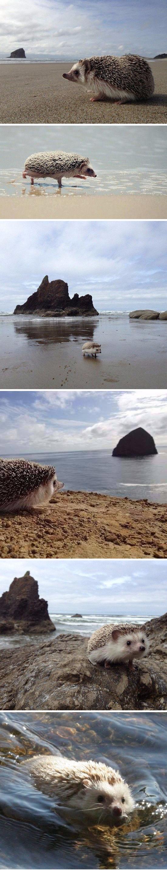 Hedgehogs trip to the beach http://ift.tt/2rqWd0h