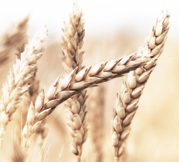 Are there natural remedies for gluten intolerance and ...