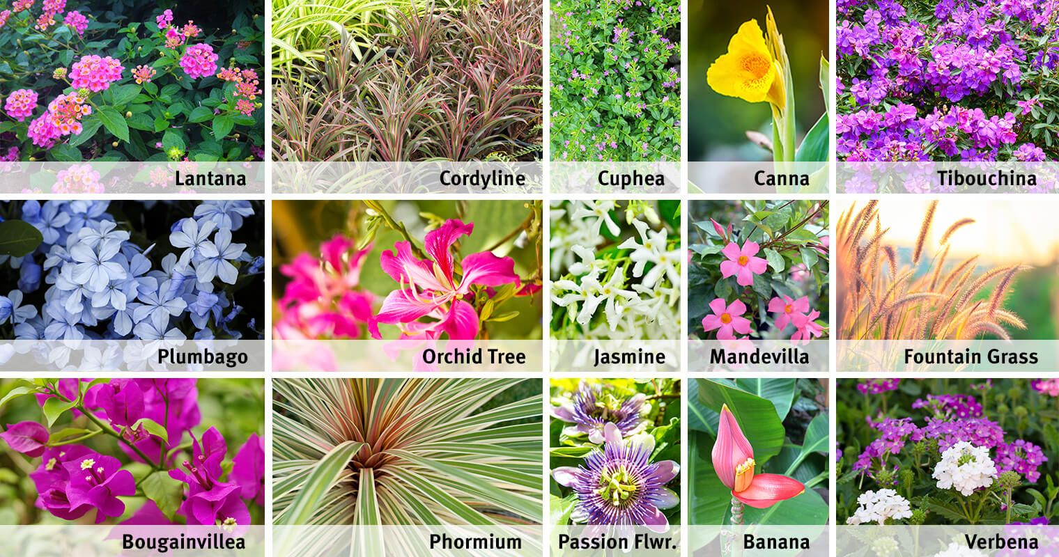 Most Beautiful Plants One Can Grow