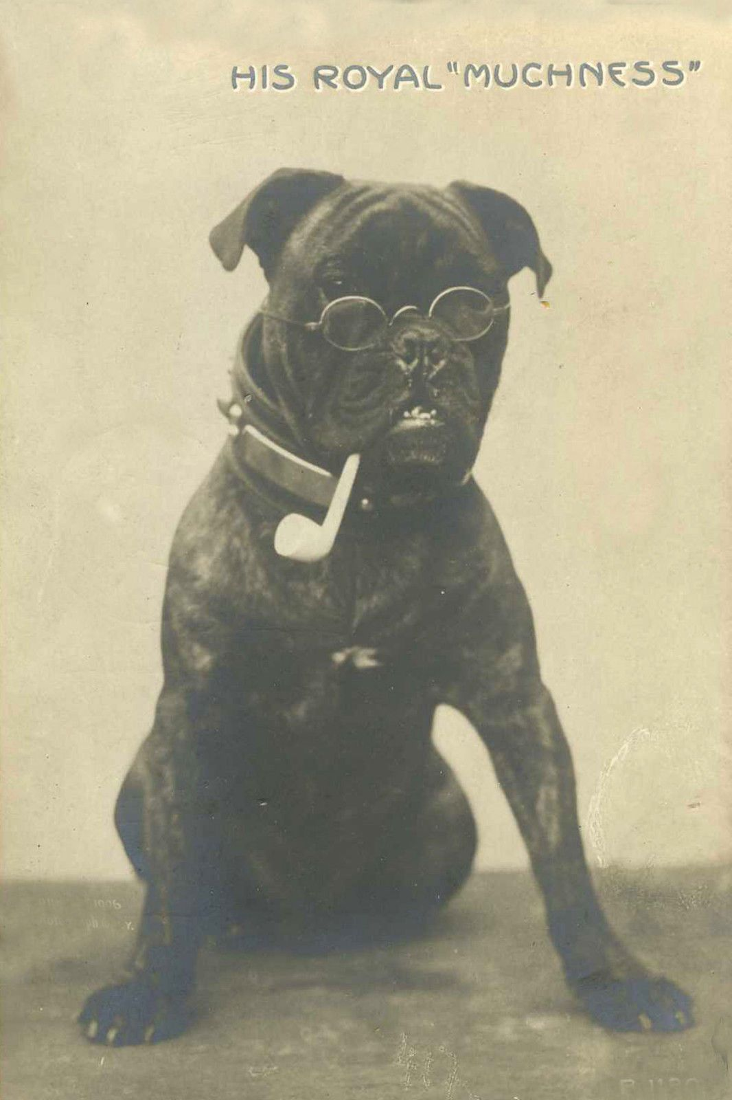 Black Pug with Pipe Antique Photo Pre 1915 Large New Blank Note Cards | eBay