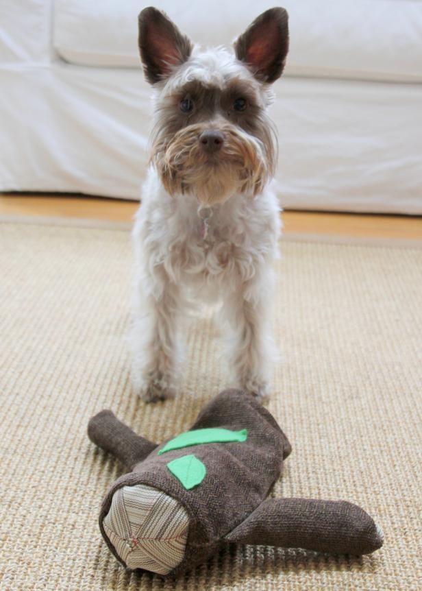 Diy Log Dog Toy Diy Dog Toys Smart Dog Toys Dog Toys