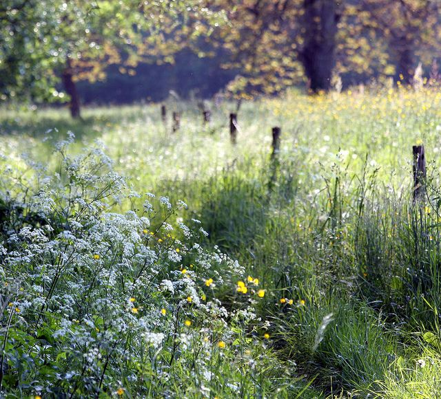 Promenade...   English countryside, Flower photography and ...