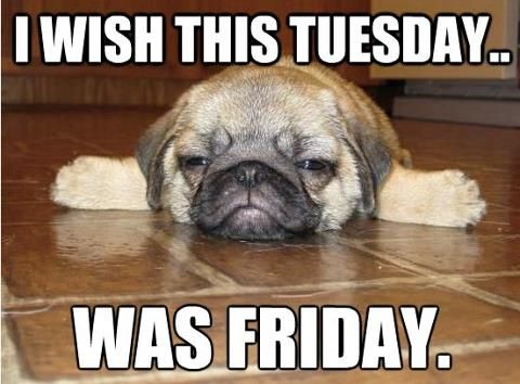 Fun Dog Meme : Tuesday only tuesday sigh books worth reading pinterest