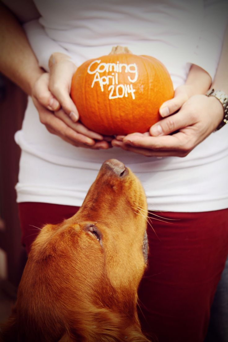Cute pregnancy announcement that includes your family dog