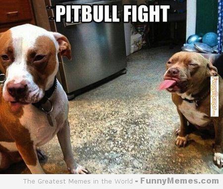 greatest fight animal