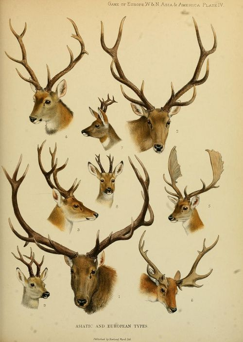 how to call deer with antlers