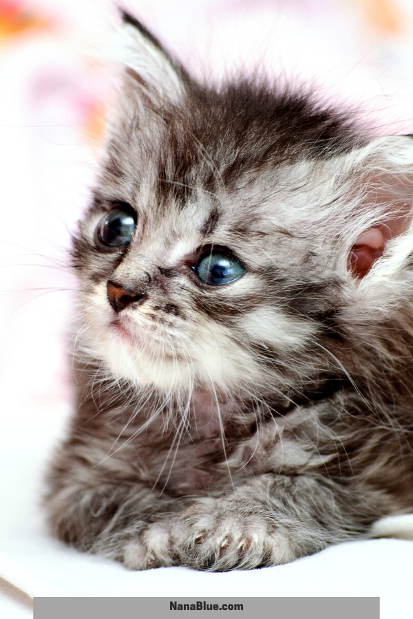 33 Enchanting Kitten Photos To Supercharge Your Day Kittens Cutest Cute Cats Kitten Pictures