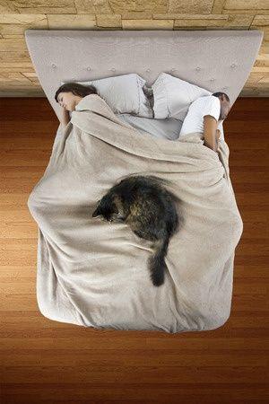 Dormir avec son chat = insomnie   Citation   Pinterest