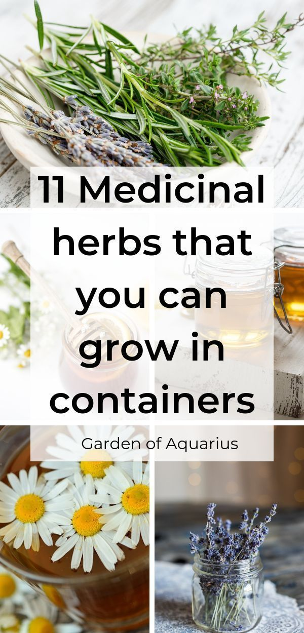11 Easy-to-grow Medicinal Herbs & how to use them