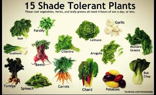 Shade tolerant veggies for an edible ornamental garden