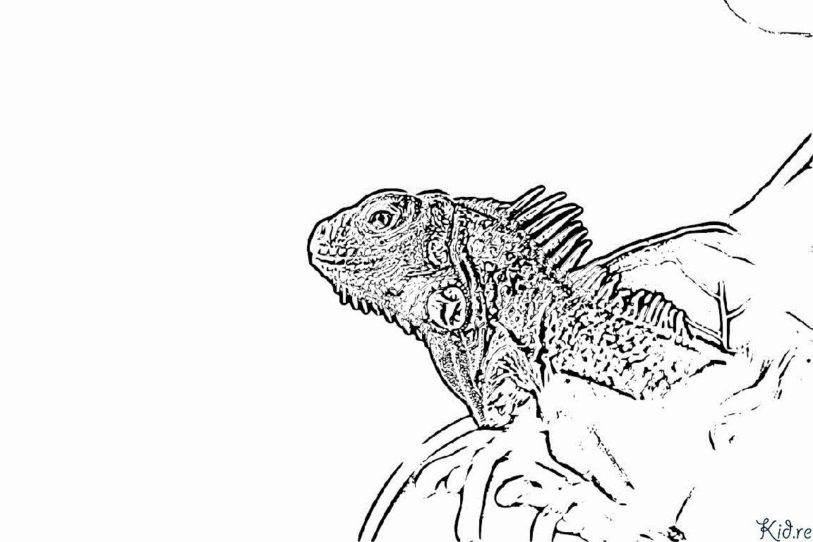 Coloring Cartoon Lizard Awesome Gecko Coloriage Censorpia