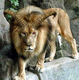 غرائب العالم بالصور غرائب وعجائب بالصور عجائب العالم Wonders Of The Wo Big Cats Art Nature Animals Wild Cats