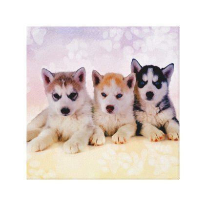 Siberian Husky Puppies Canvas Print Zazzle Com Future Pets
