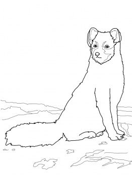 sitting arctic fox with images  fox coloring page coloring pages free printable coloring pages