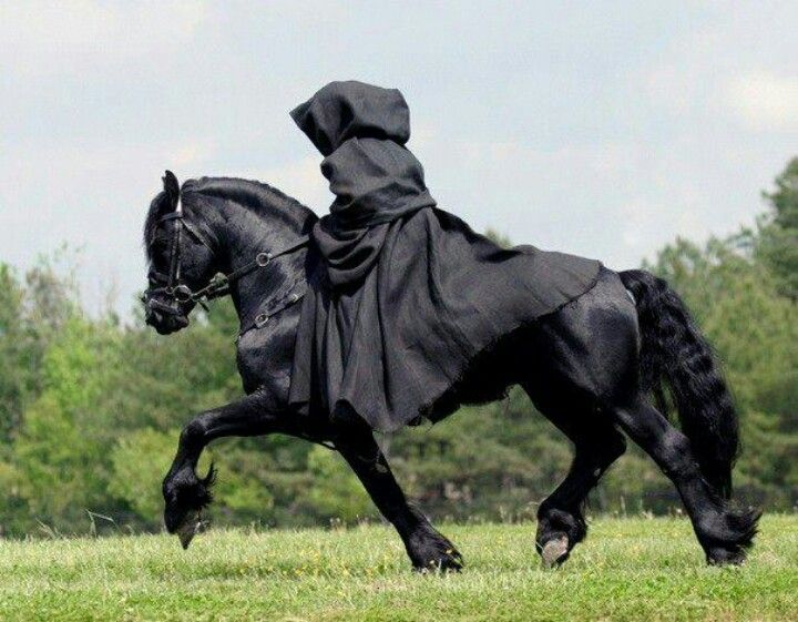 Pin by sharon goad on horses horses friesian horse - Home interior horse pictures for sale ...