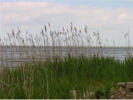 CHESAPEAKE BAY FRONT BUILDING PARCEL IN WATERFRONT COMMUNITY WITH AMENITIES $135,000.
