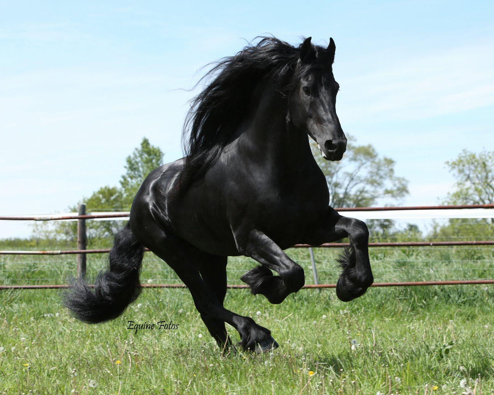 Black Horse Wallpaper Iphone Animal Wallpaper