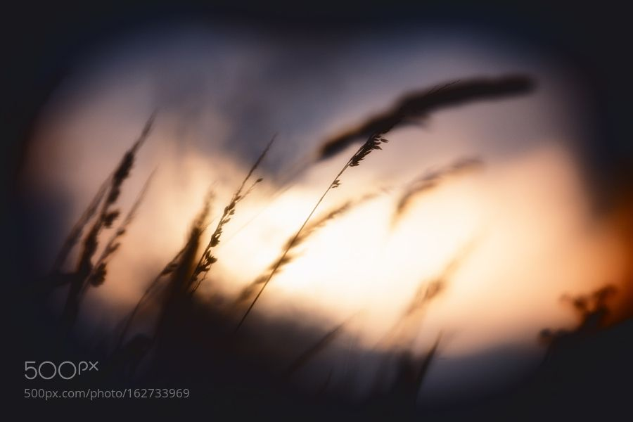 back light by hansdewaay
