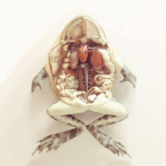 anatomical frog print