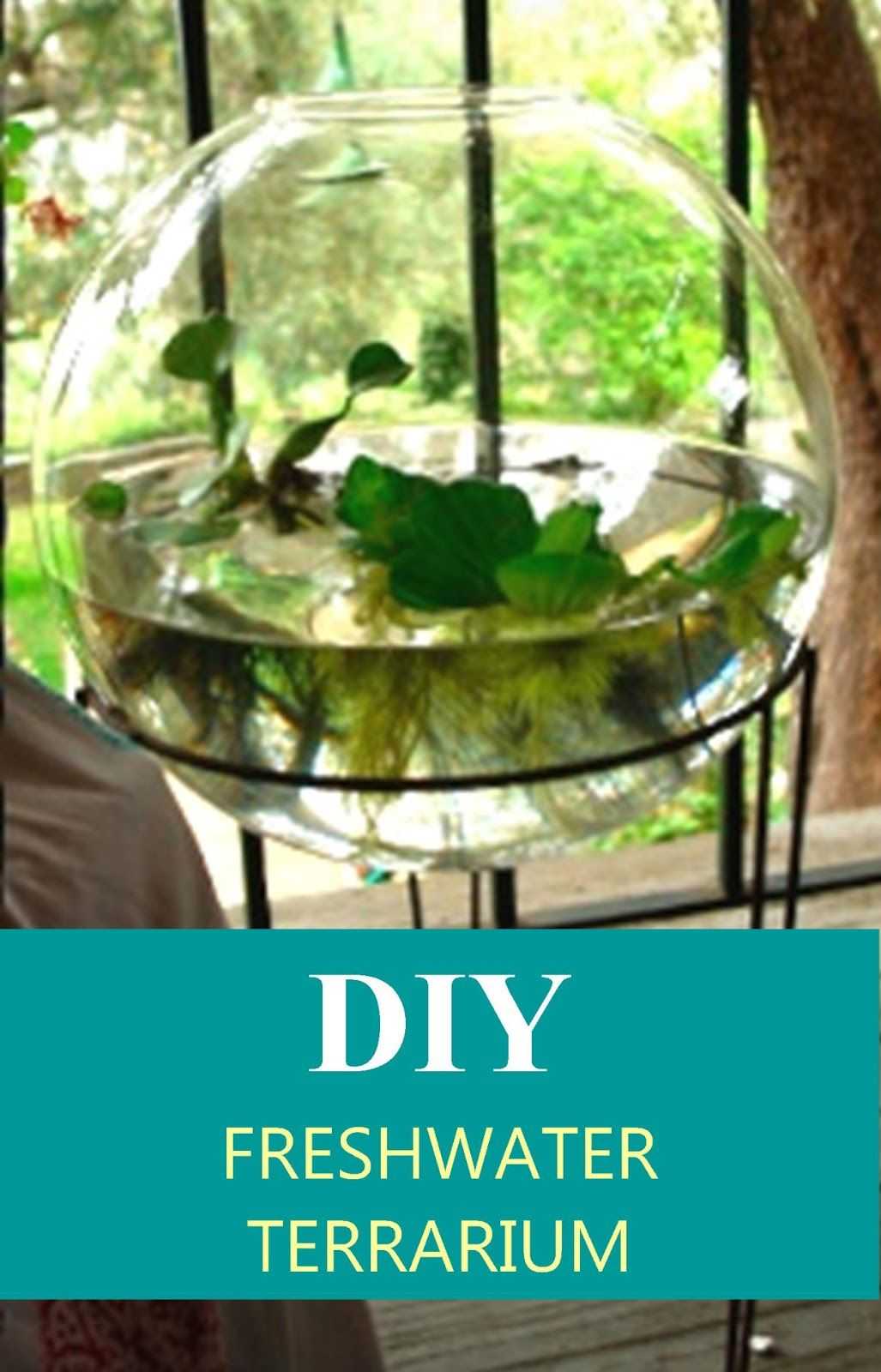 Artsea chic diy freshwater terrarium put castle covered with moss