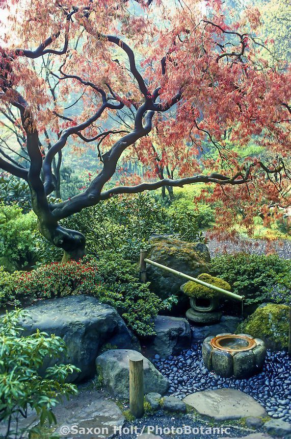 Japanese garden. 'Deer Scare' under Japanese Maple tree with emerging sp, #39Deer #e...