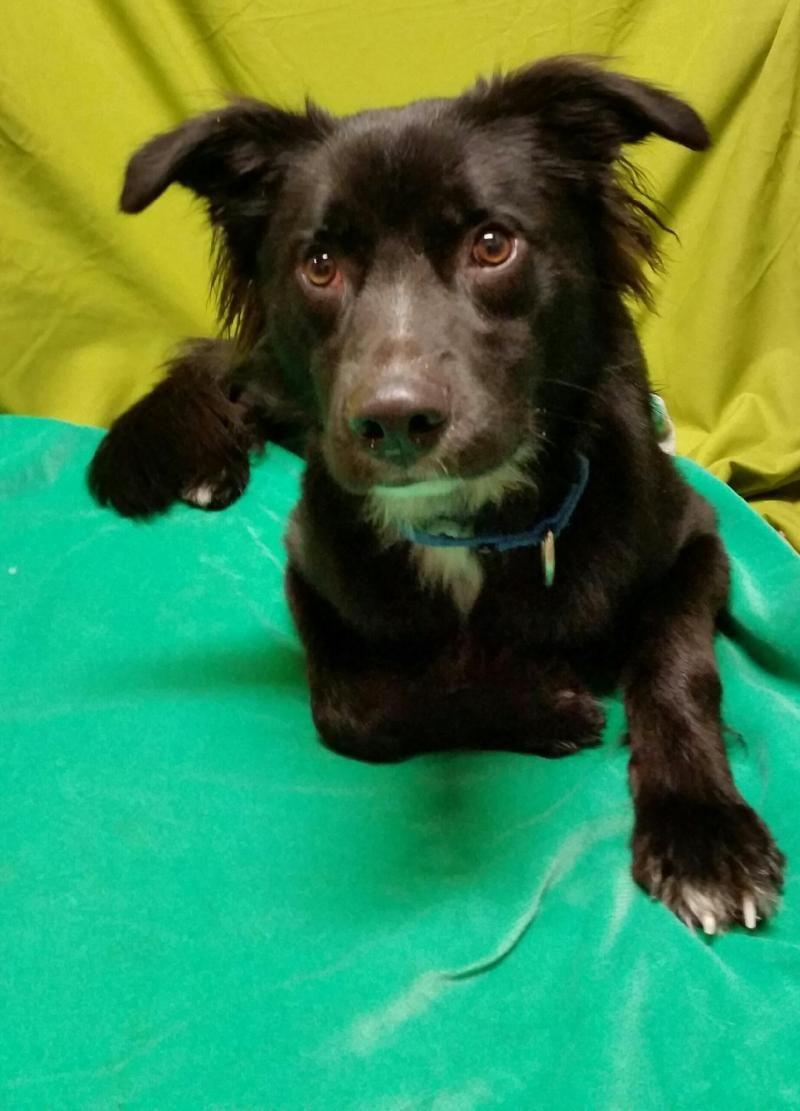 Adopt Buddy On Petfinder Animal Shelter Border Collie Dog Doggy