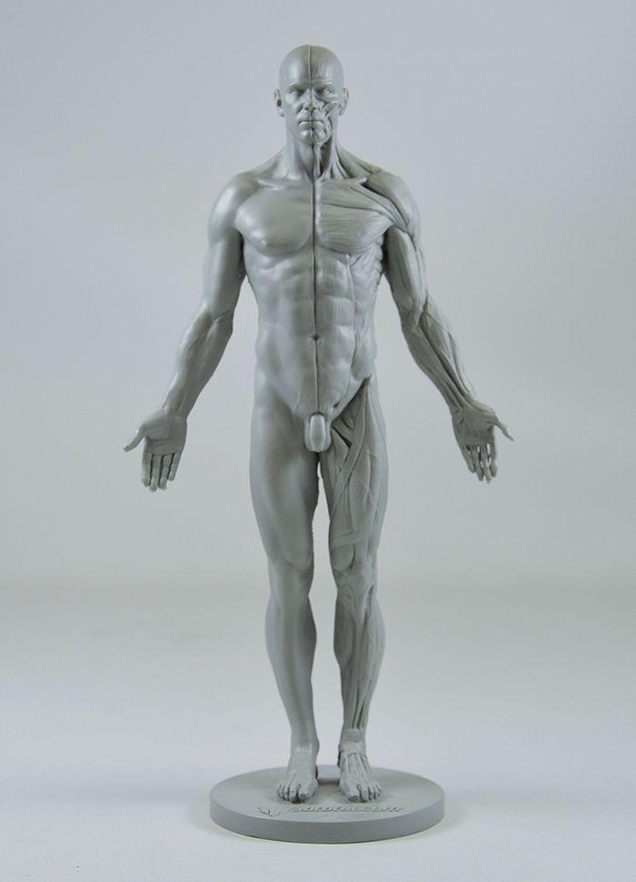 3dtotals Male Anatomy Figure Concept Art Anatomy Anatomy