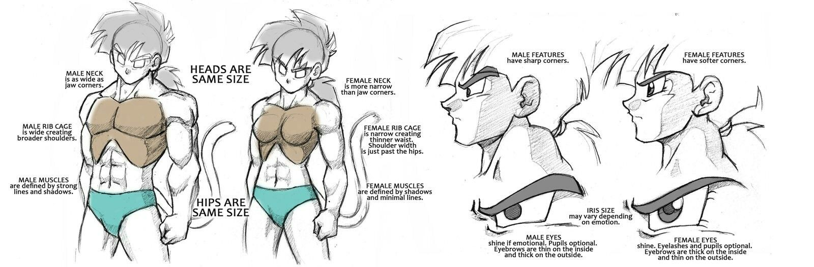 Dragonball Saiyan Anatomy Tutorial - Male/Female by Rider4Z ...
