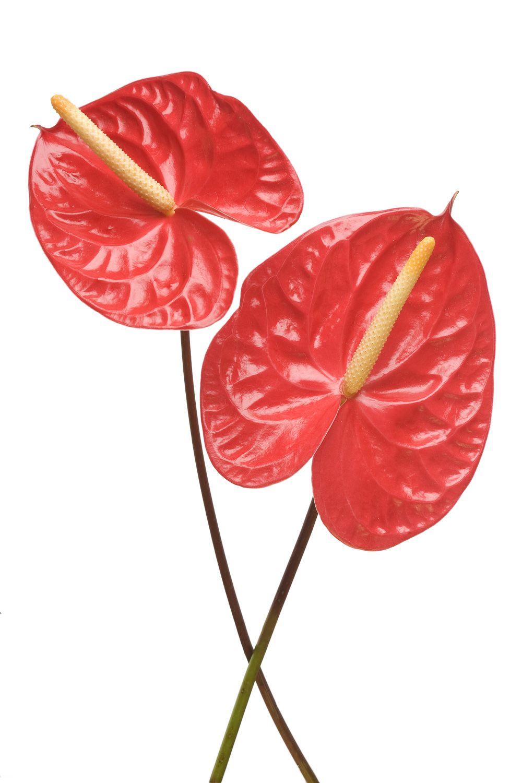 Jardin Floral Design Fort Myers Florist