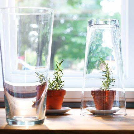 ikea 4 id es pour jardiner avec des objets du quotidien d tourn s semis cloche et vase. Black Bedroom Furniture Sets. Home Design Ideas