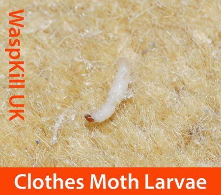 Clothes Moth Treatments, Tips and Advice | Bristol Pest