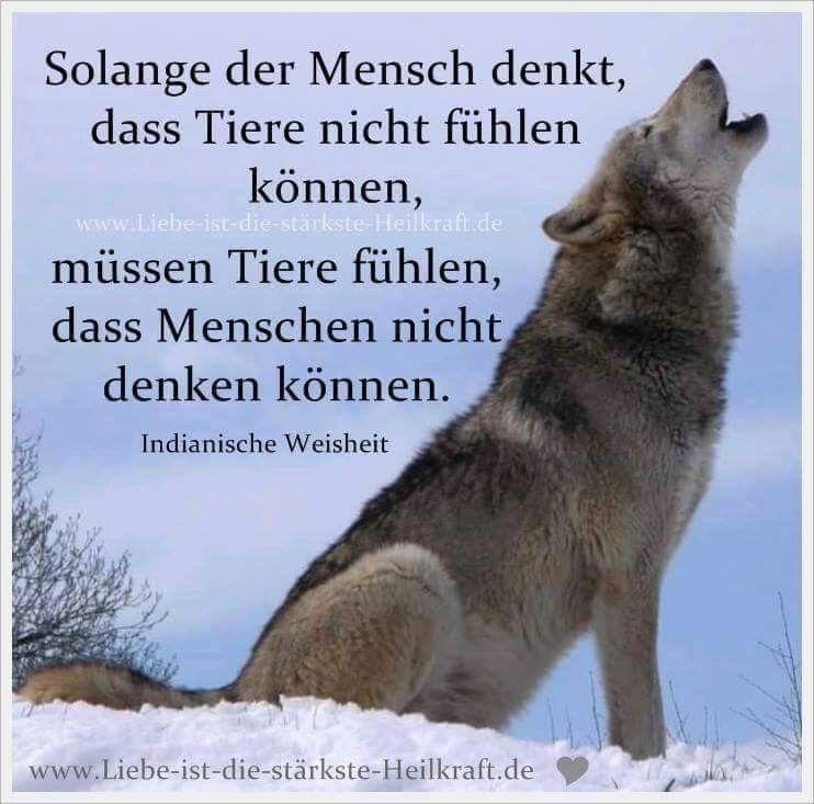 Wolf deutsch einsamer sprüche Zitate Peanuts