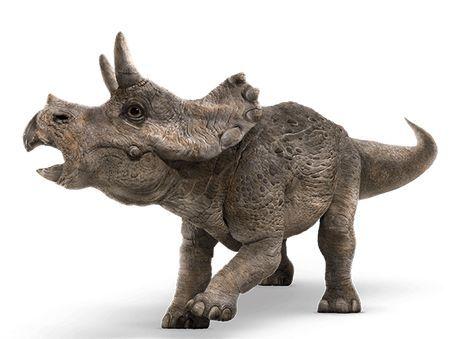 Triceratops #dinosaurpics