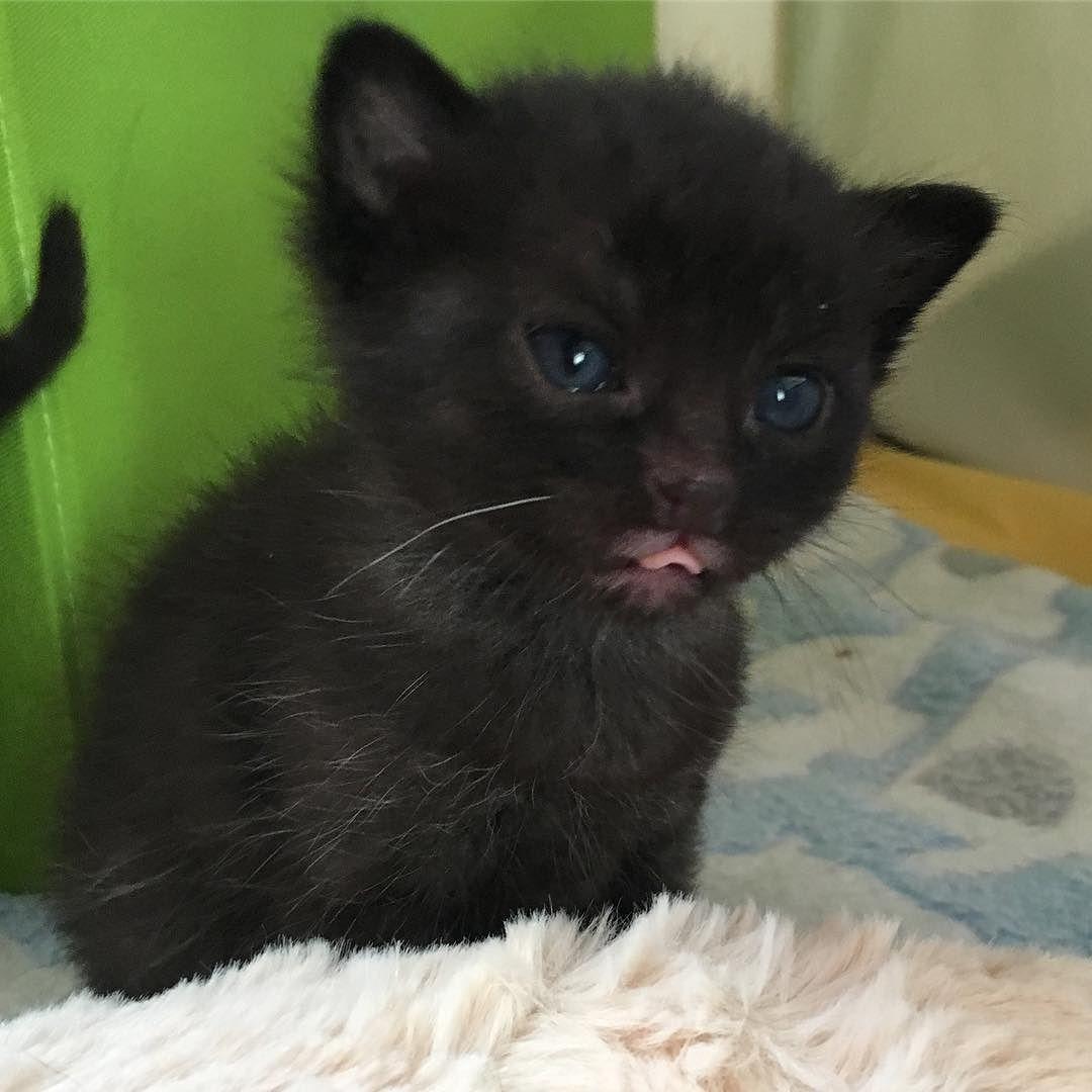 Und Jetzt Noch Der Hingucker Des Tages Krumels Weisses Schnurrhaar Ist Das Nicht Extremst Goldig Cute Cats And Kittens Kittens Cutest Kittens