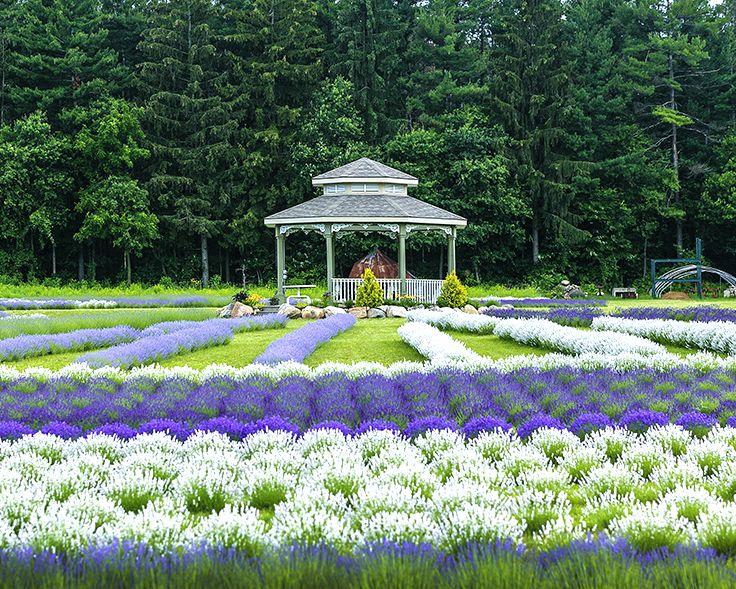 12 Places In Ontario That Are Magical In The Summer ...