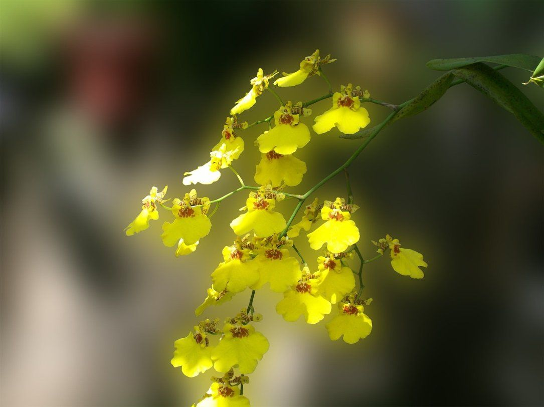 Nature Cultivation Flowers Orchids