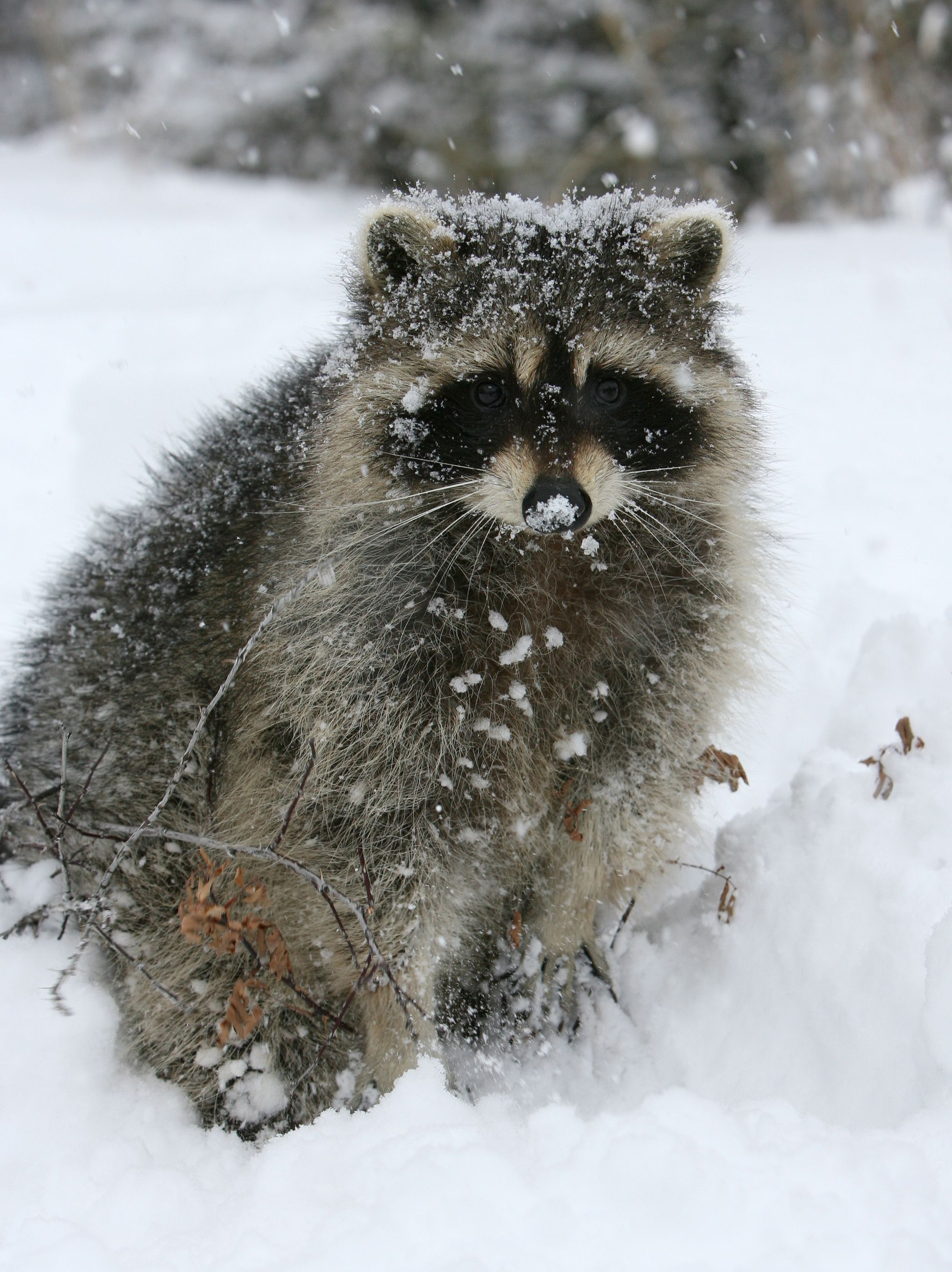 Pin On Wildlife Info