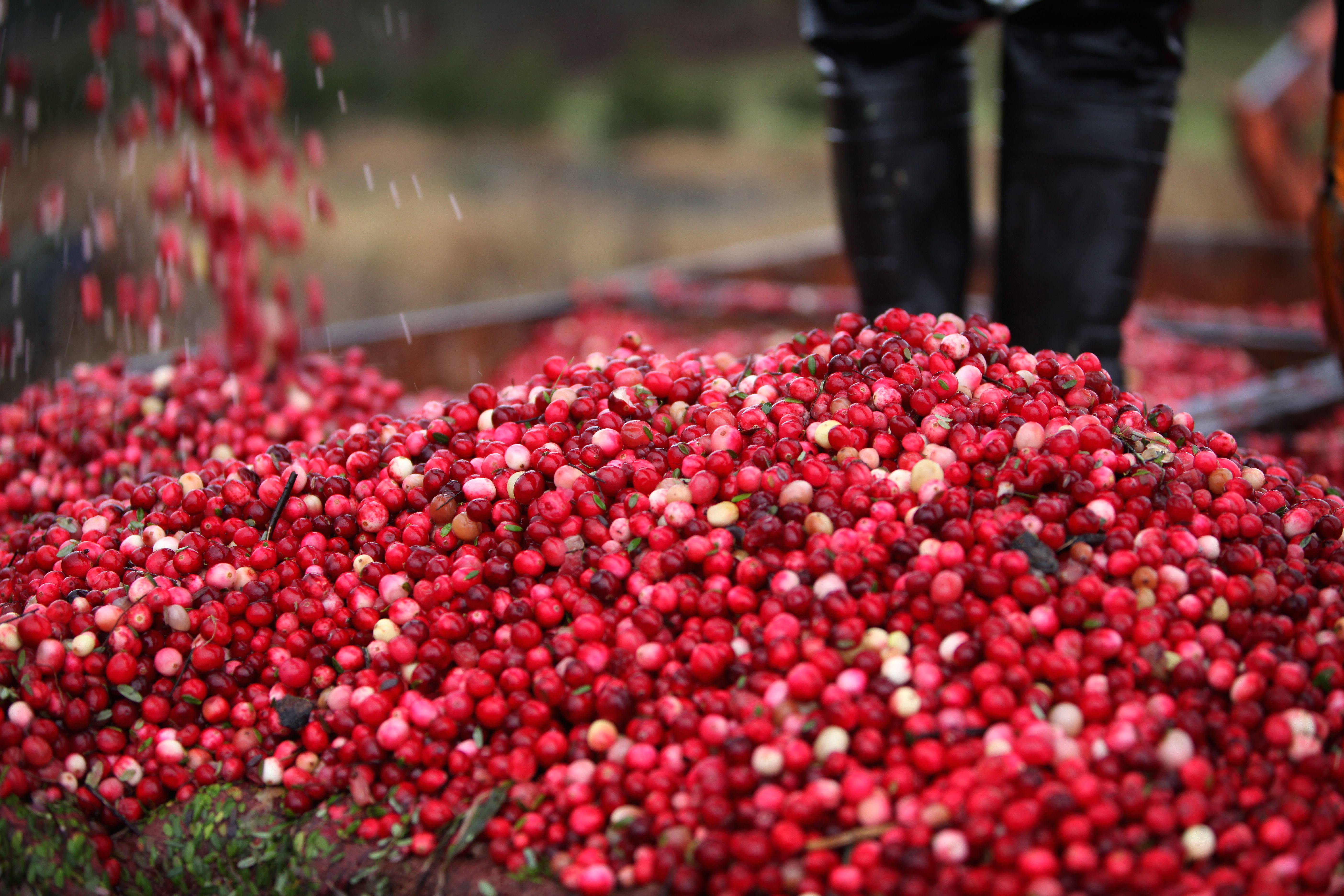 There's something for everyone at Eagle River's annual Cranberry Fest, October 1-2! Make your plans to visit now.