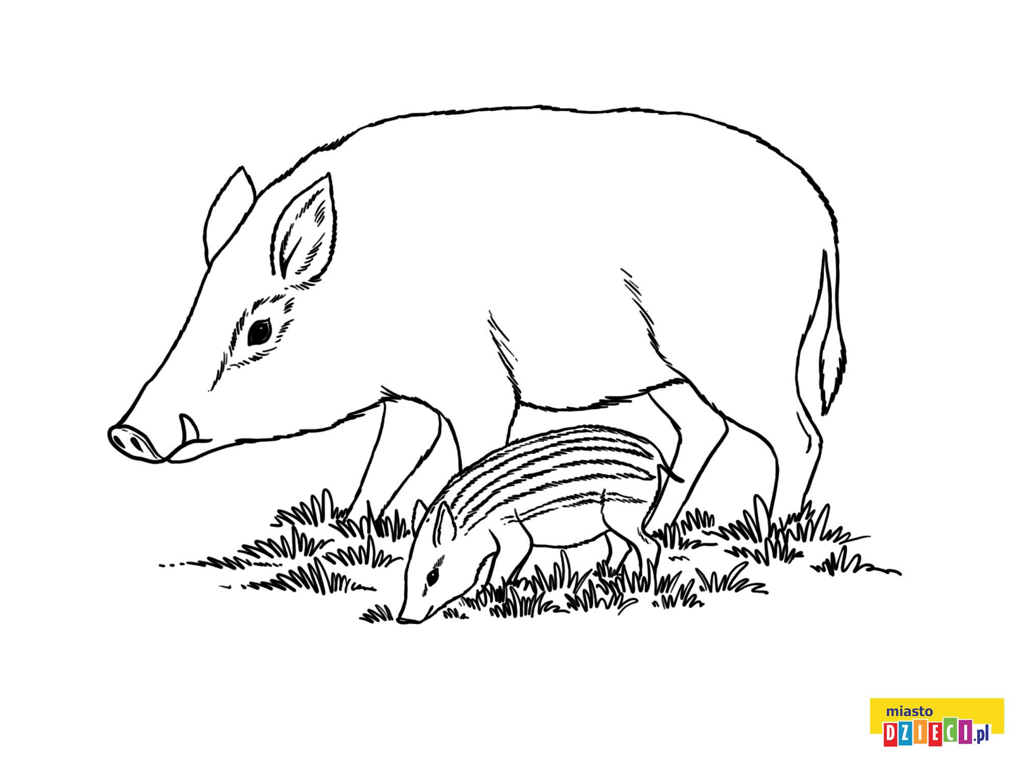 Zwierzeta Lesne Dzik Animals Fictional Characters Coloring Pages