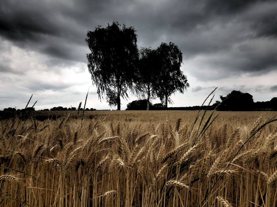 Region Ortenau Wolfgang P. Der Herbst in der Ortenau