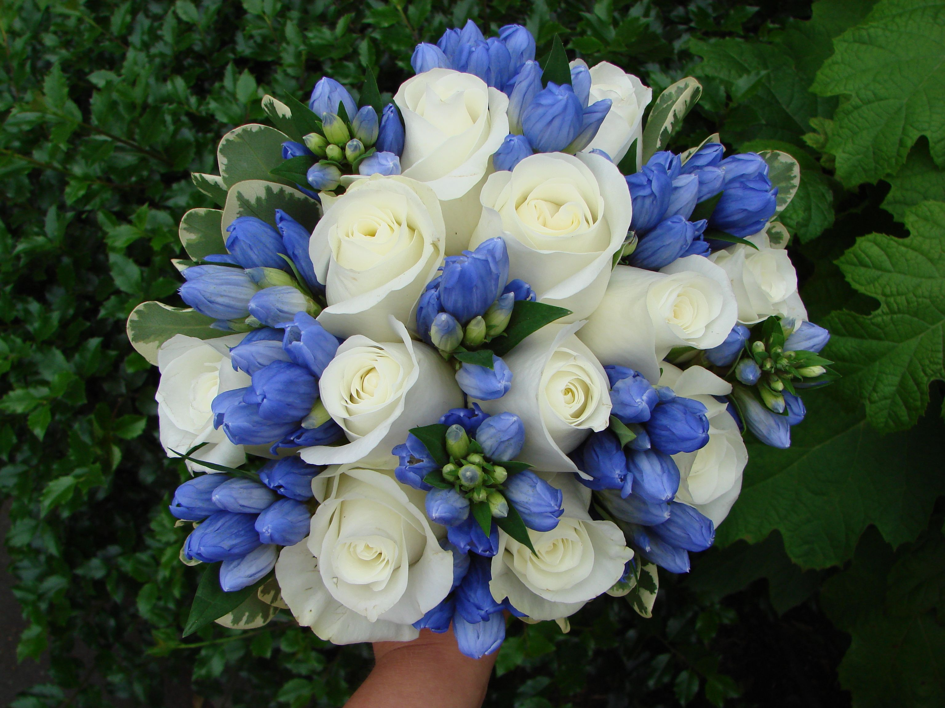 White Rose and Gentiana Bouquet, gardenias Floral Blue