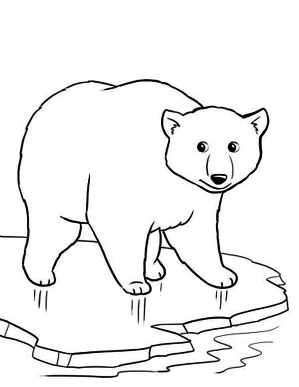 Polar Bear on Thin Ice Coloring Page maovanky zvierata