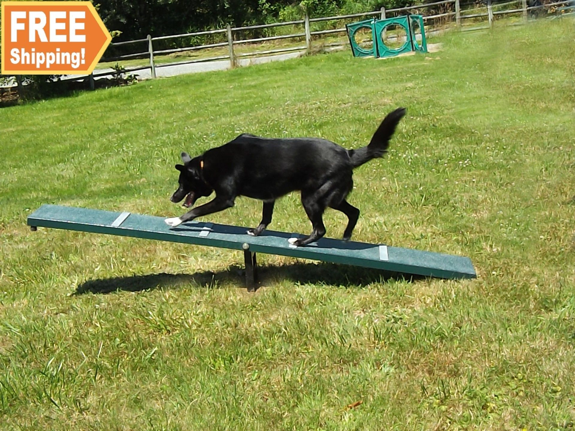 Scottie Seesaw Dog Park Equipment Best Dogs Dog Agility