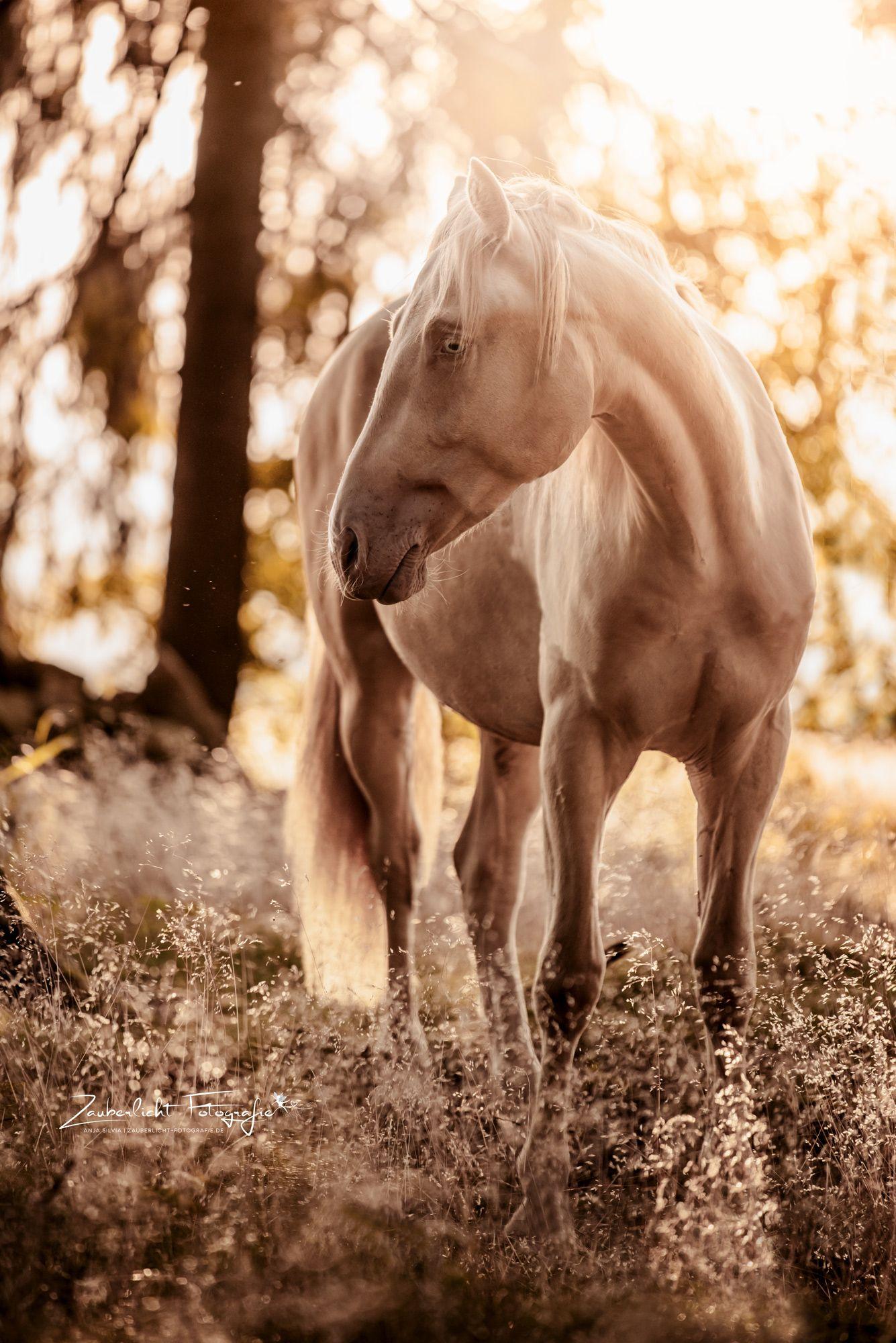 Zauberlicht Fotografie Pferde Fotografie Pferdefotografie Pferdefotos
