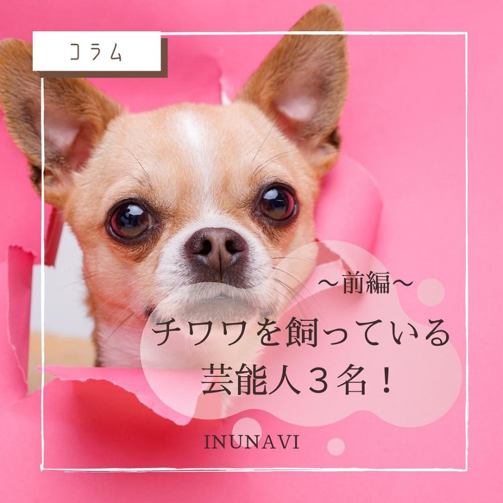 Inunavi公式アカウント Inunavi Instagram写真と動画 犬 写真 動画