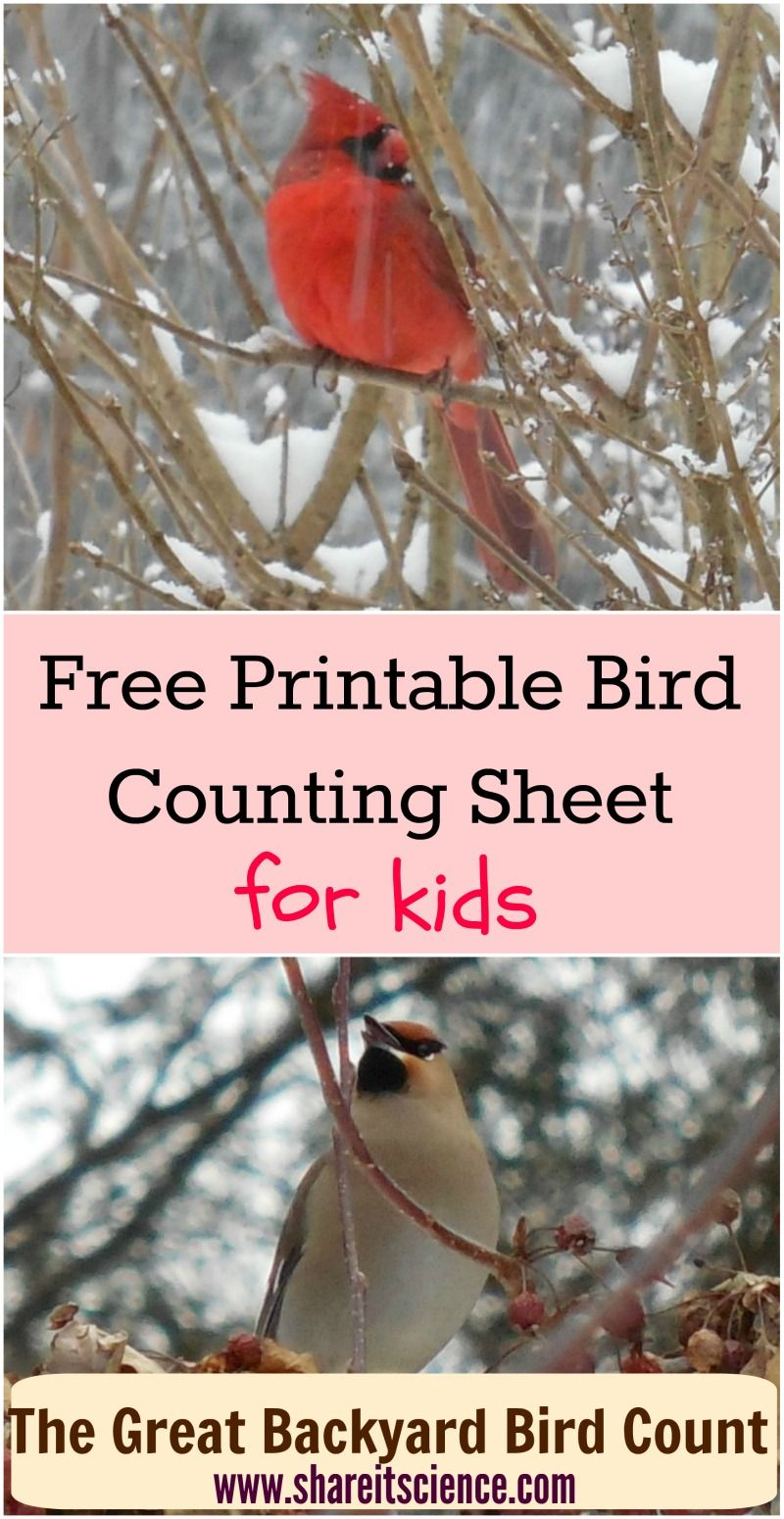 Download this freebie printable to help your young birders ...