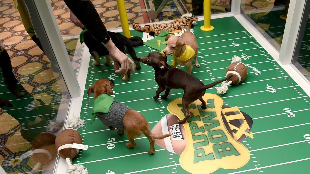 Dont miss puppy bowl xii ahead of super bowl 50 puppies